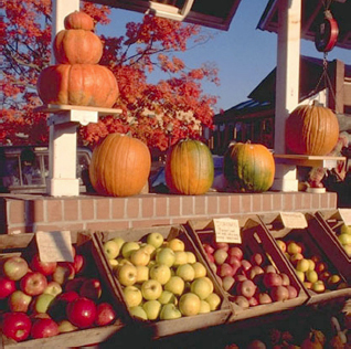 Apples and Pumpkins laying atop a market stand.